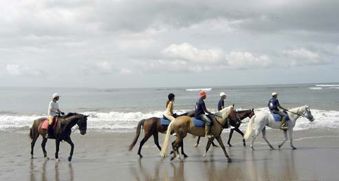 Bali Horse Riding Come Ride With Us